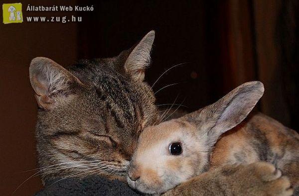 Nyuszi-cica barátság