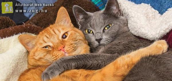 Ölelkező cicusok
