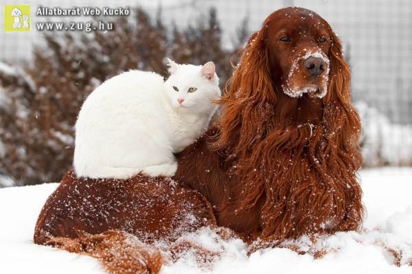 Kutya és cica a hóban
