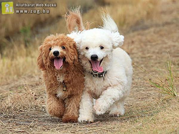 Futkározó kutyusok
