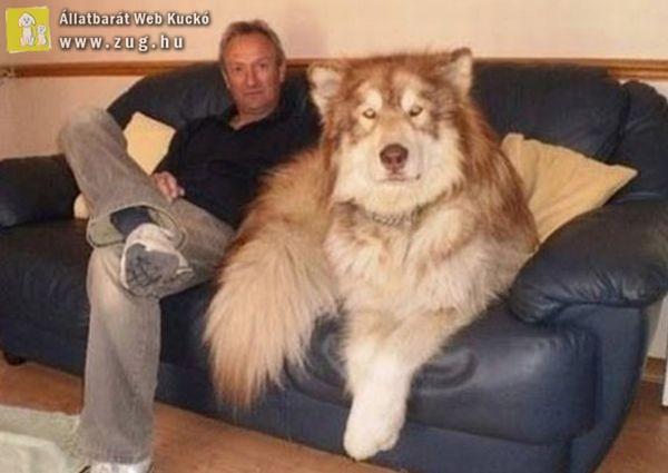 Óriási kutyus
