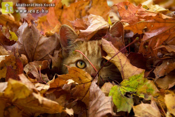 Őszi cicus