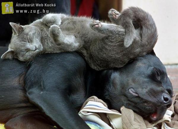 Pihenés kutyaháton