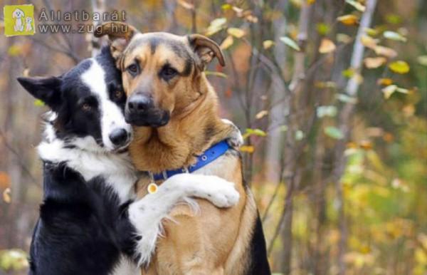 Pózolós kutyusok