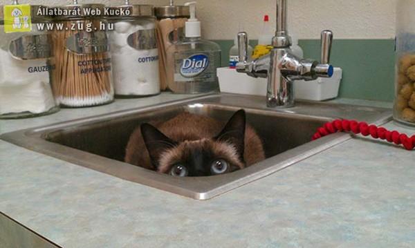 Rejtőzködő cicus