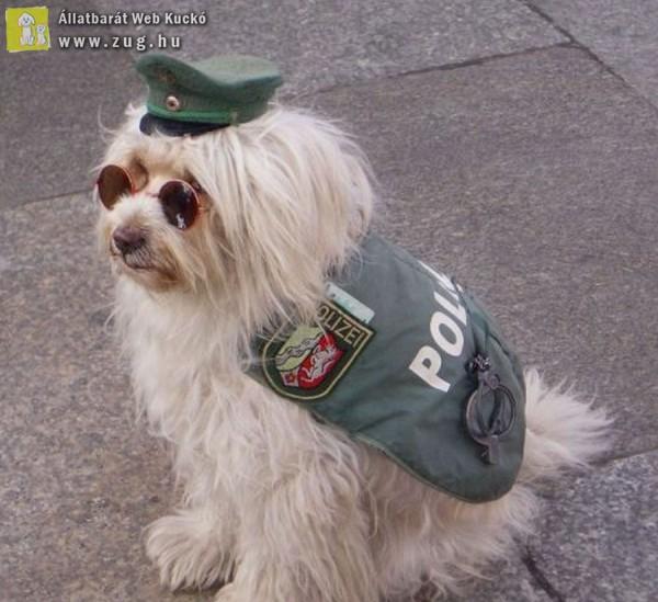 Rendőrkutya
