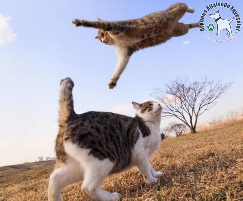 Repülő macska