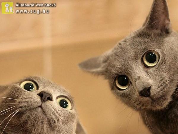 Selfiző cicusok