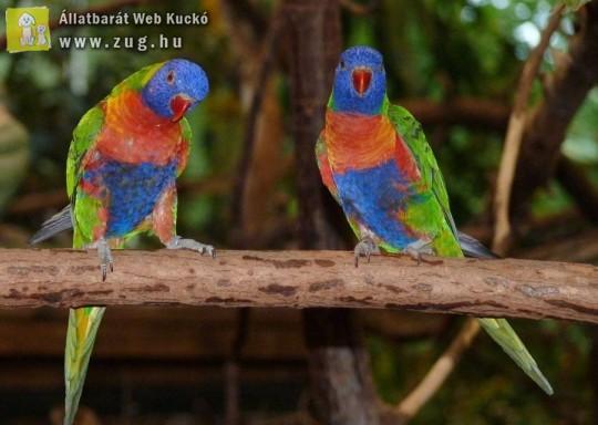 Színes papagájok