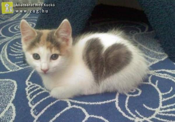 Szívecskés cica
