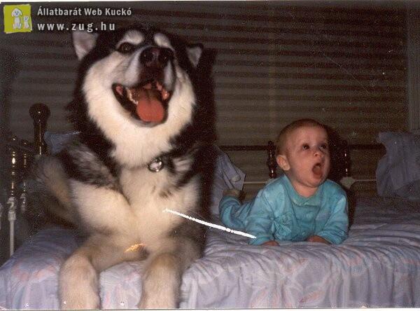 Tátott szájjal mesenézés a kutyussal