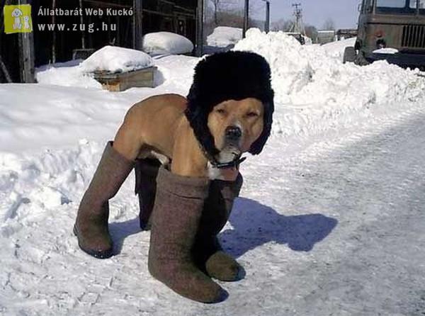 Télre készülődve
