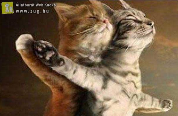 Titanic macska módra