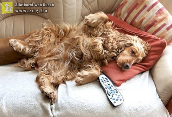 Vasárnapi pihenő