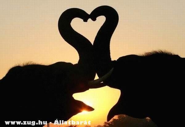 Elefántszerelem