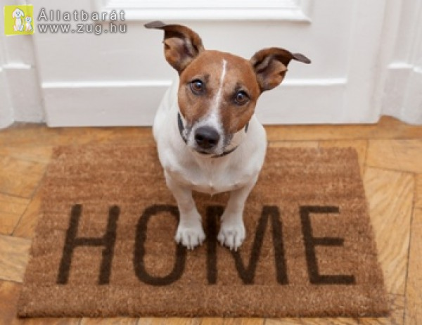 Házi kutya, hazavár