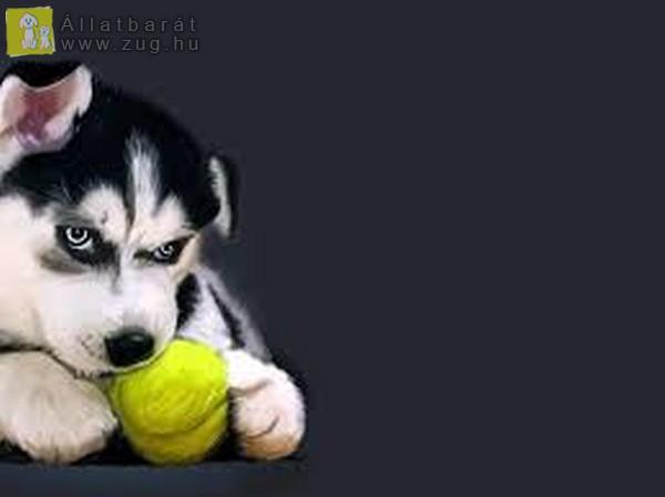 Indulhat a labdázás