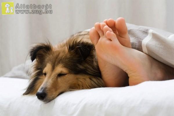 Kutyus az ágyban