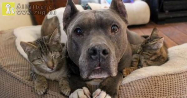 Kutya-cica barátság