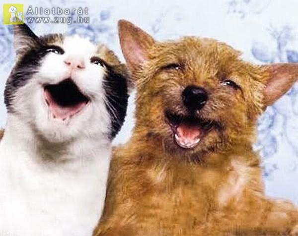 Vidám kutyus és cicus
