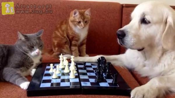 Kutya-cica sakkparti
