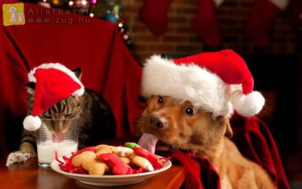 Kutya és cica karácsonyi hangulatban