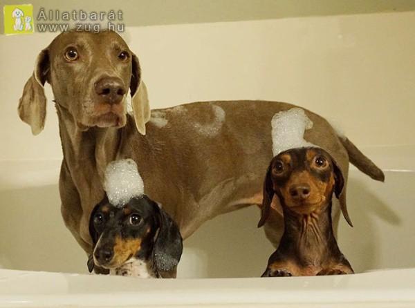Fürdőző kutyusok
