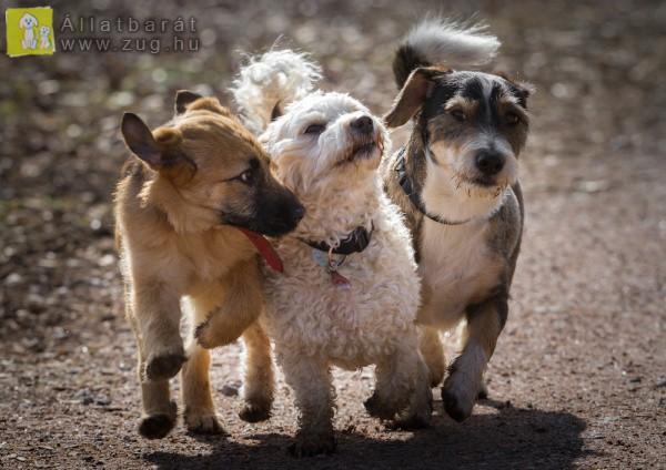 Barátkozó kutyusok