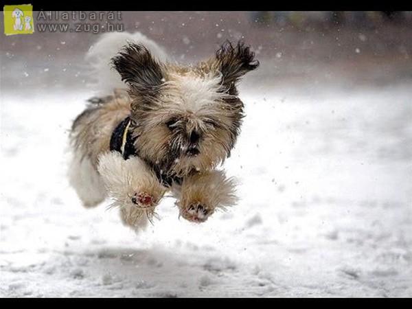 Kutyus a hóban