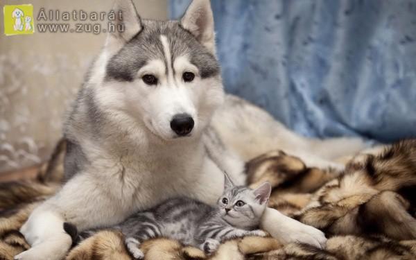 Apró cica, nagy kutyus
