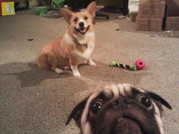Szelfiző kutyusok