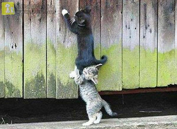 Közös cica munka