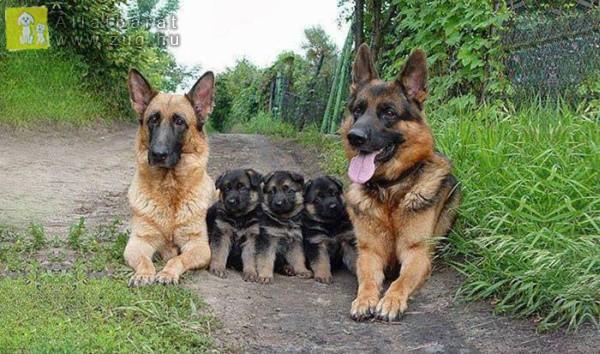 Kutyacsalád