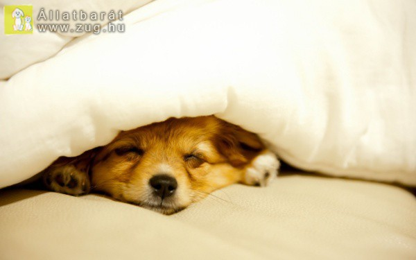 Reggeli szundikálás kutyamódra