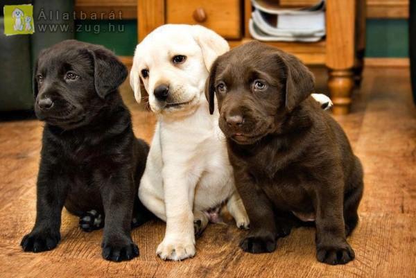 Cuki kutyusok