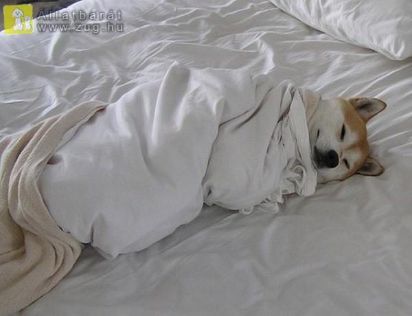Álmos kutyus