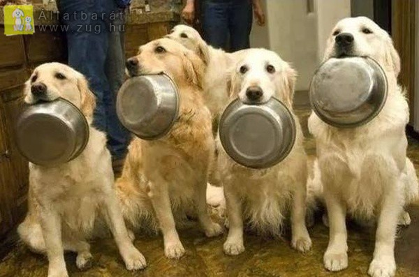 Éhes kutyusok