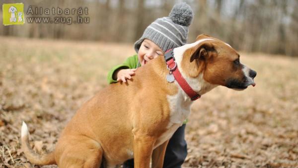 Állatbarát kisfiú