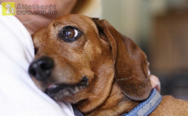 Kutyaszeretet - örök barátság