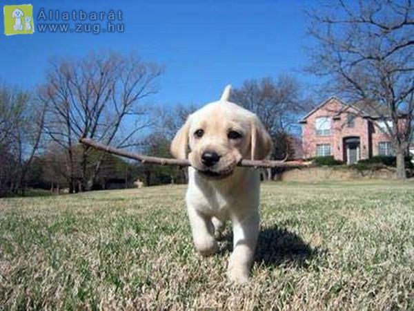 Játékos kutyus