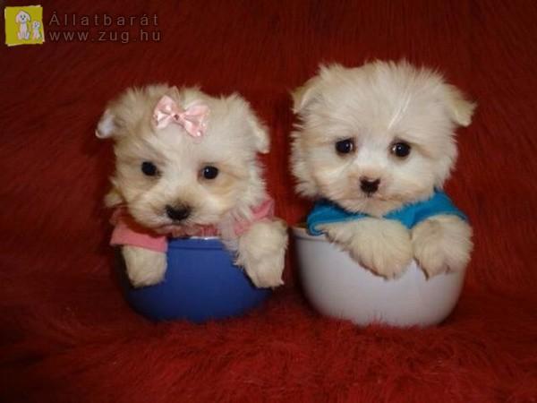 Aprócska kutyusok