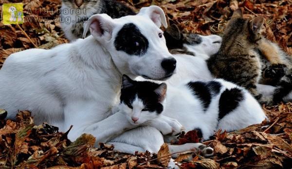 Foltos cica, foltos kutya