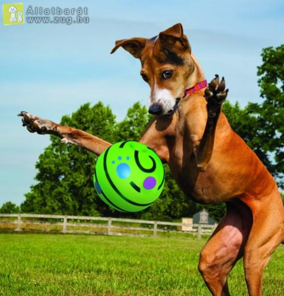 A kutyus és a labda
