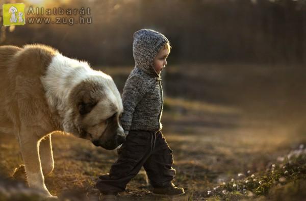 Kutyus-gyerkőc barátság