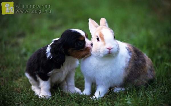 Húsvéti cukiság: kutyus és nyuszi
