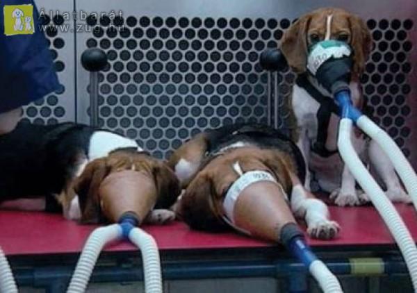 Állatkísérletet Ne!