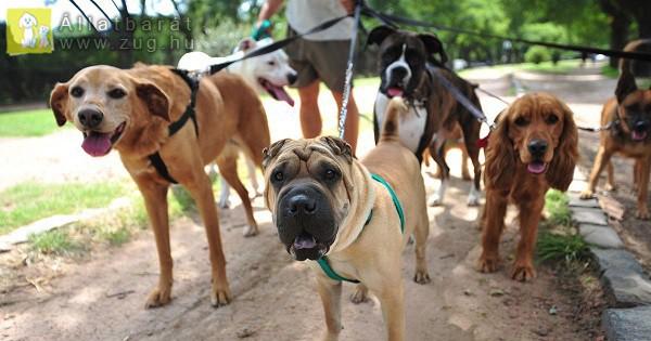 Sétáló kutyusok