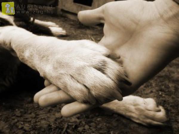 kutya: igaz barát