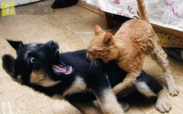 Kutyák és cicák