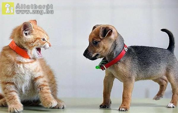 Kiskutyával